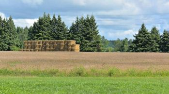 Farmed Fields offer Attractive Tax Benefits - Country homes for sale and luxury real estate including horse farms and property in the Caledon and King City areas near Toronto