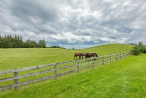 Paddock - Country homes for sale and luxury real estate including horse farms and property in the Caledon and King City areas near Toronto