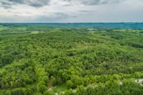 Mulmur Woodlot - Country Homes for sale and Luxury Real Estate in Caledon and King City including Horse Farms and Property for sale near Toronto