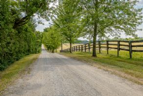 Tree-lined driveway - Country homes for sale and luxury real estate including horse farms and property in the Caledon and King City areas near Toronto