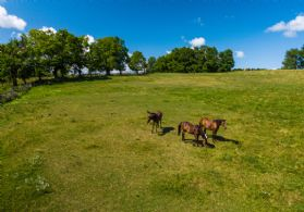 Expansive Paddock Lands - Country homes for sale and luxury real estate including horse farms and property in the Caledon and King City areas near Toronto